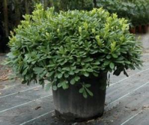 Devon Garden Design Plant Sourcing